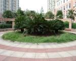 金水苑绿化